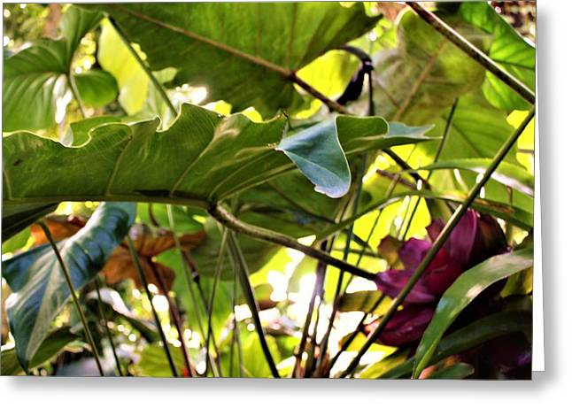Greeting Card featuring the photograph Jungle Jive by Mindy Newman