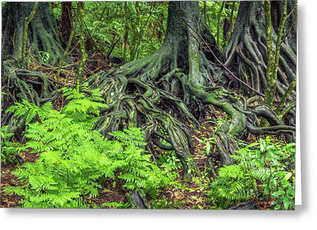 Greeting Card featuring the photograph Jungle Roots by Les Cunliffe