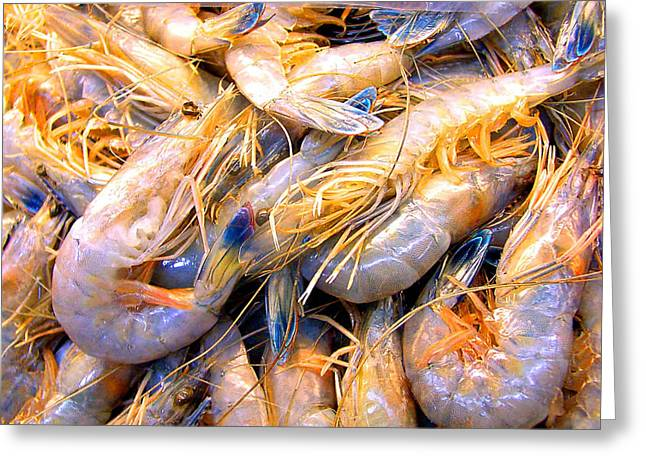 Greeting Card featuring the photograph Just Caught Shrimp by Merton Allen
