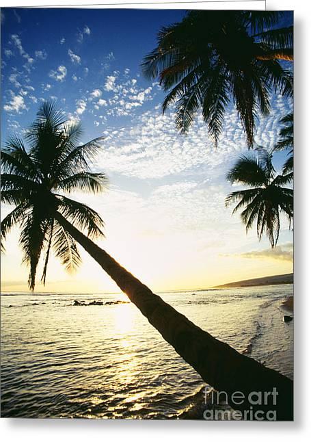 Kauai, Waimea Greeting Card