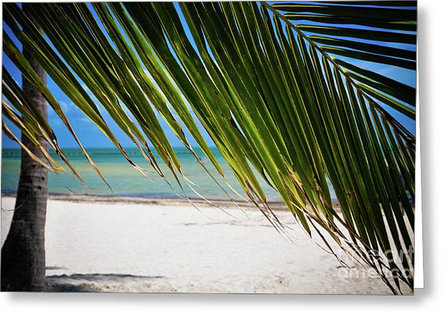 Greeting Card featuring the photograph Key West Palm by Kelly Wade