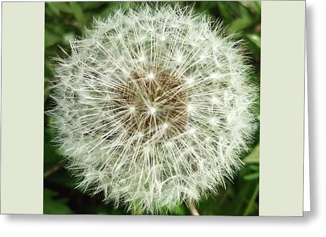 Kind Such As The Flower   Greeting Card by Sobajan Tellfortunes