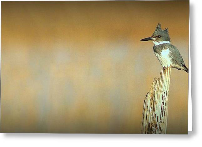 Greeting Card featuring the photograph Kingfisher.. by Al  Swasey