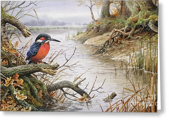 Kingfisher Greeting Card by Carl Donner