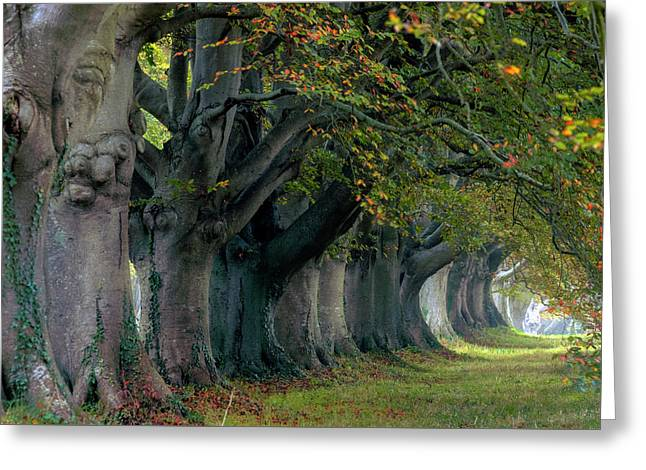Kingston Lacy - England Greeting Card by Joana Kruse