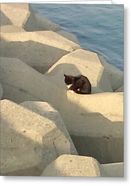 Koneko Means A Kitten. Greeting Card