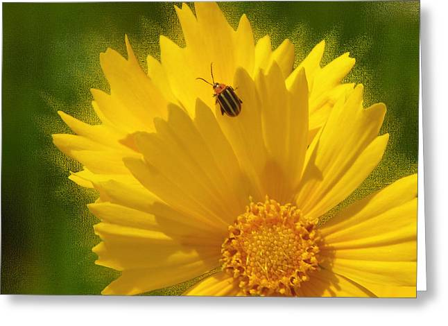 Lady Bug Lookout Greeting Card by Paul Anderson