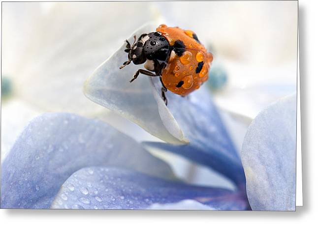 Blooming Greeting Cards - Ladybug Greeting Card by Nailia Schwarz
