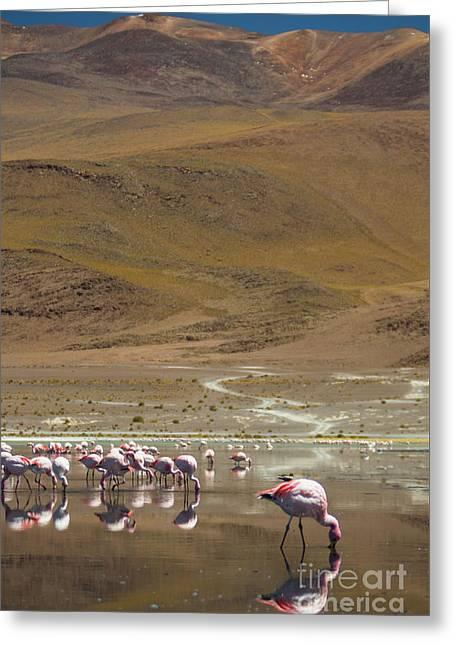 Laguna Colorada, Andes, Bolivia Greeting Card