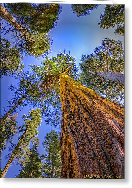 Giant Sequoia Trees Iv Greeting Card