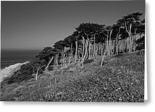 Lands End In San Francisco Greeting Card