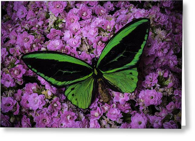 Large Green Butterfly Greeting Card