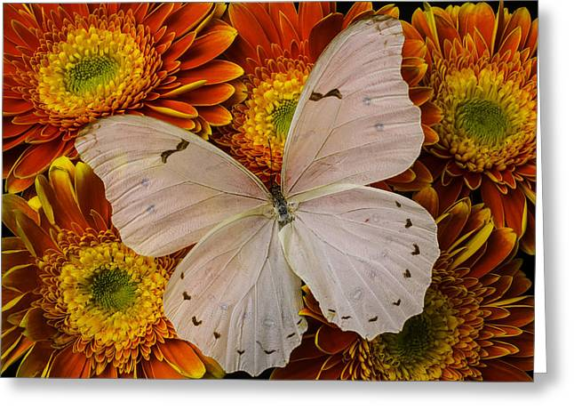 Large White Butterfly Greeting Card by Garry Gay