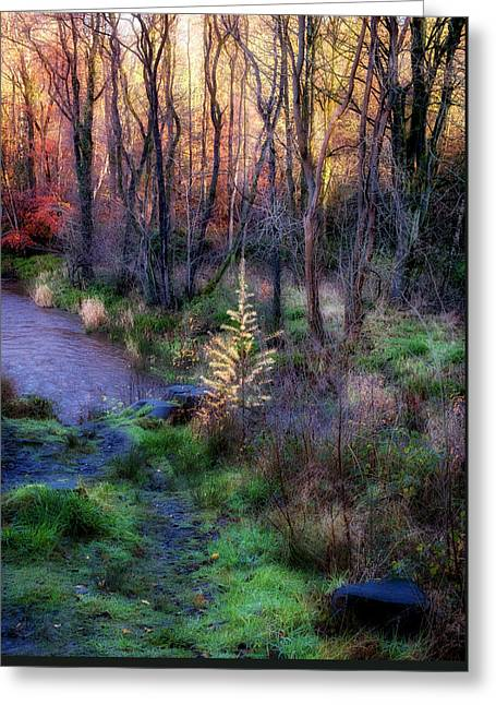 Greeting Card featuring the photograph Last Days Of Autumn by Jeremy Lavender Photography