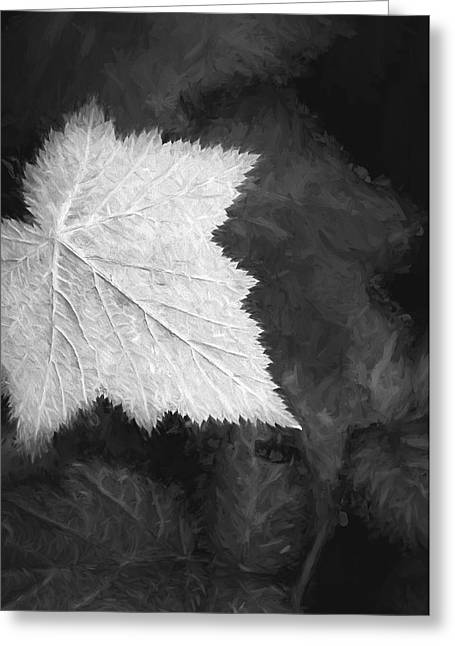 Leaf Me Alone Greeting Card by Jon Glaser