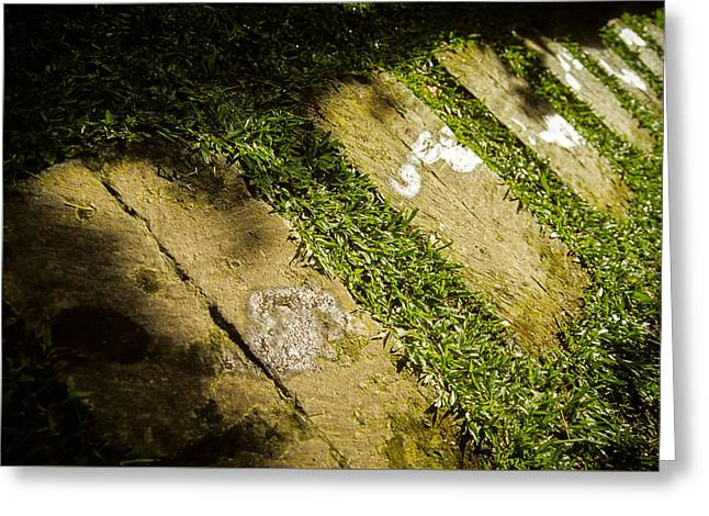 Greeting Card featuring the photograph Light Footsteps In The Garden by T Brian Jones
