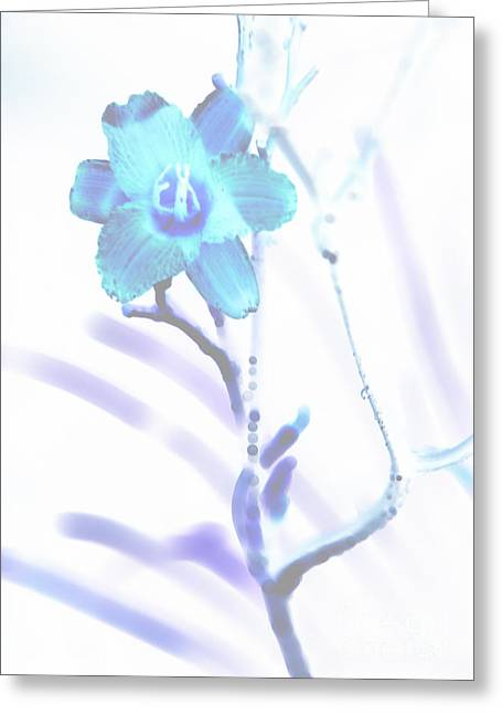 Lily Greeting Card by Amanda Barcon