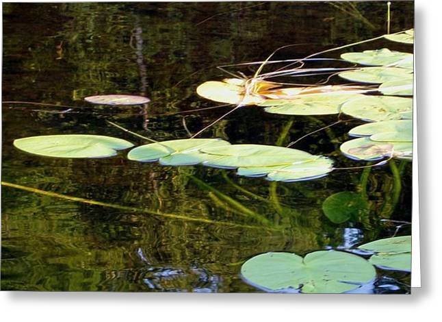 Lily Pads On The Lake Greeting Card