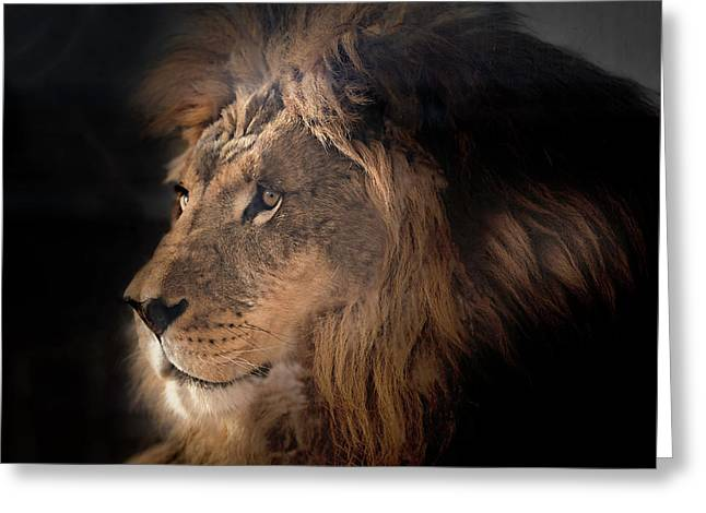 Lion King Of The Jungle Greeting Card