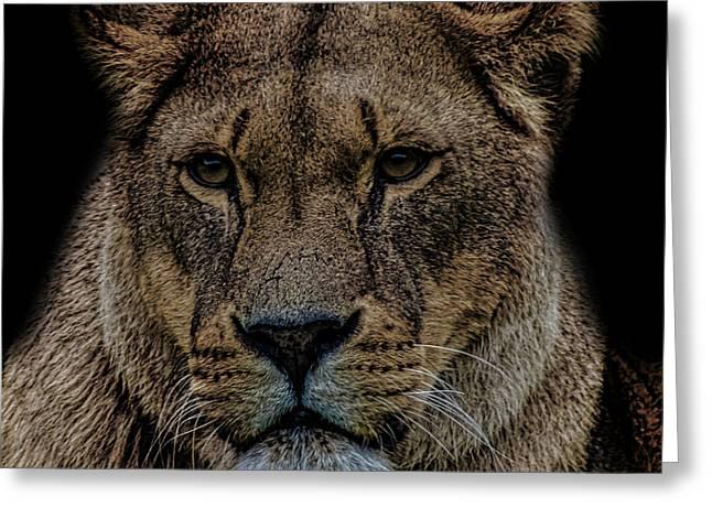 Lion Portrait Greeting Card