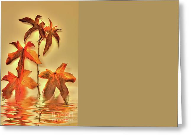 Liquidambar Greeting Card by Elaine Teague