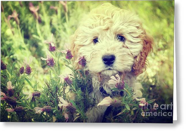 Little Puppy Greeting Card by Angela Doelling AD DESIGN Photo and PhotoArt