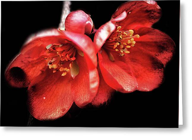 Little Red Flower Greeting Card