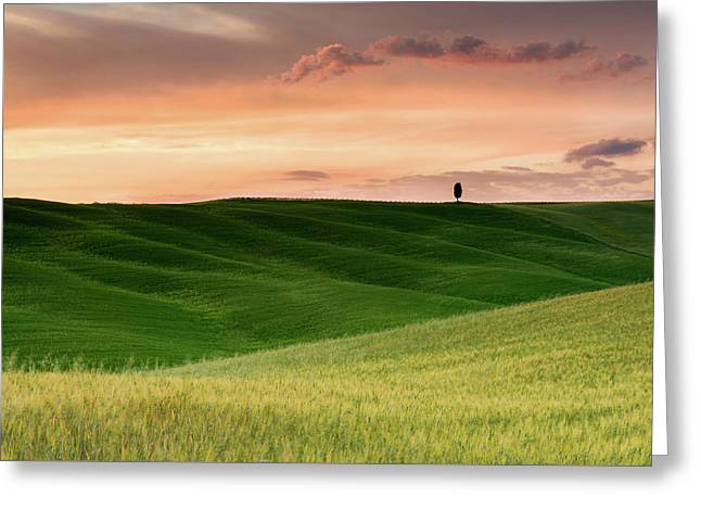 Lone Cypress Greeting Card by Michael Blanchette