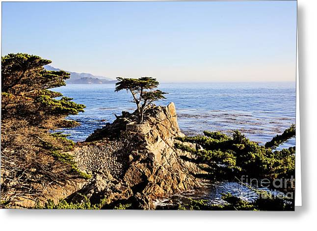 Lone Cypress Greeting Card by Scott Pellegrin