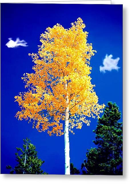 Lone Golden Aspen Greeting Card