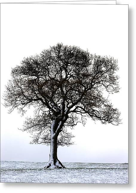 Monotone Color Greeting Cards - Lone Tree In Field Greeting Card by John Short