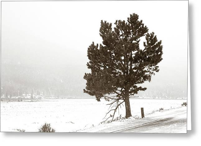 Lone Tree Greeting Card by Marilyn Hunt