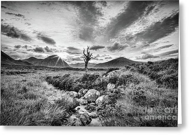 Lone Tree, Rannoch Moor, Scotland Greeting Card