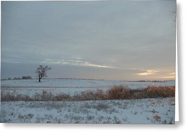 David Junod Greeting Cards - Lonesome Tree Greeting Card by David Junod