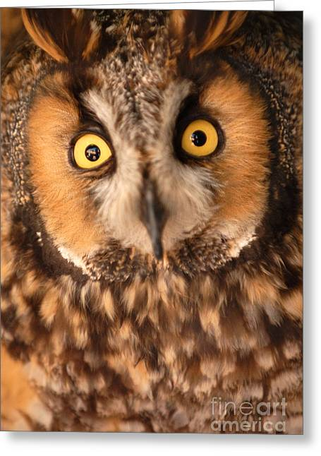 Long Eared Owl Greeting Card by Dennis Hammer