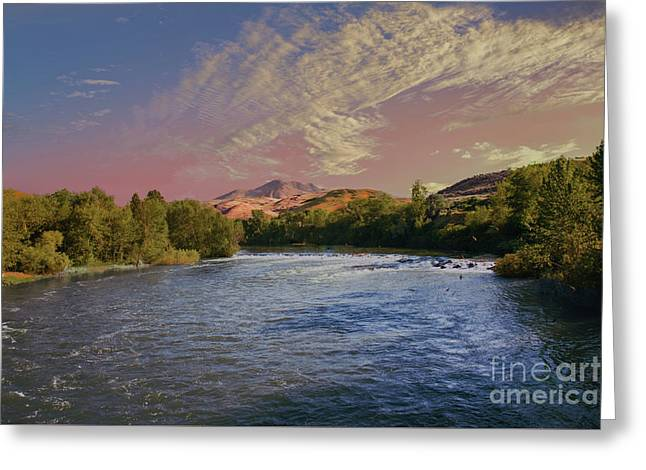 Looking Up The Payette River Greeting Card by Robert Bales