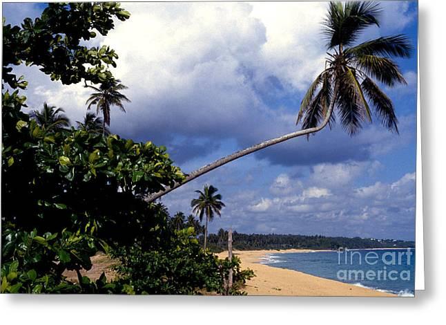 Los Tubos Beach Greeting Card by Thomas R Fletcher