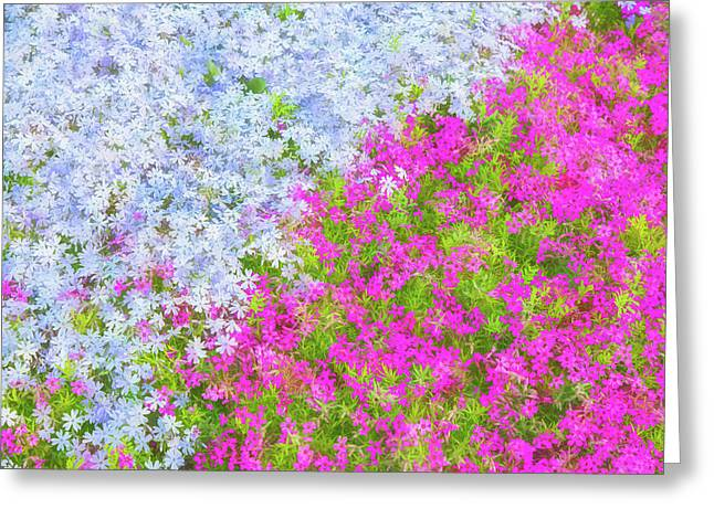 Pink And Purple Phlox Greeting Card