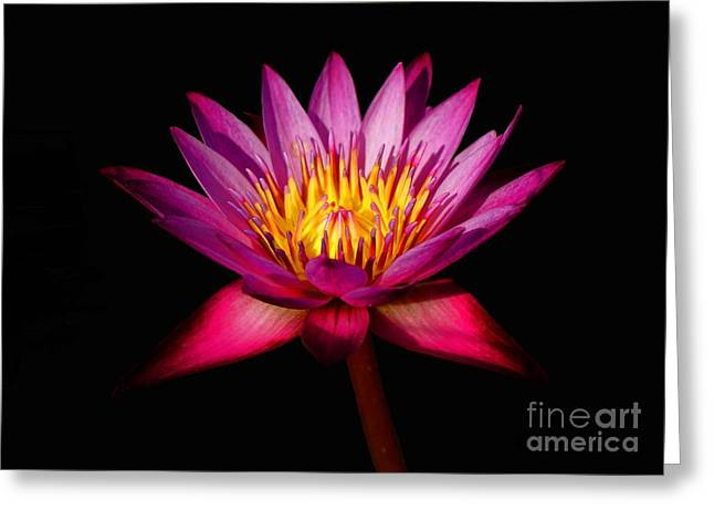 Greeting Card featuring the photograph Lotus by Louise Fahy