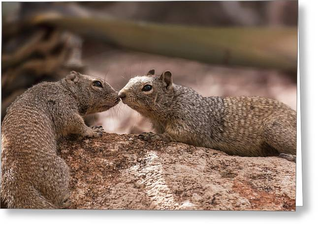 Greeting Card featuring the photograph Love Is In The Air  by Saija Lehtonen