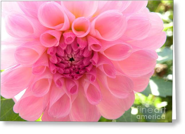 Lovely Lilly Greeting Card by Christine Belt