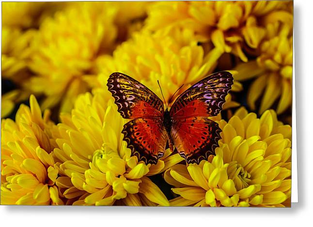 Lovely Orange Butterfly Greeting Card by Garry Gay