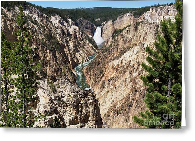 Lower Falls From Artist Point In Yellowstone National Park Greeting Card by Louise Heusinkveld