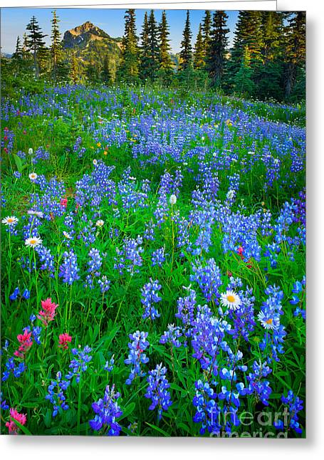 Lupine Cornucopia Greeting Card by Inge Johnsson