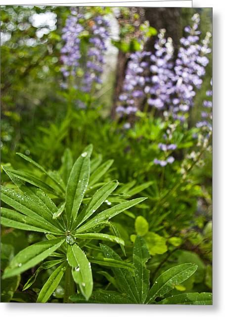Lupine Leaf Greeting Card