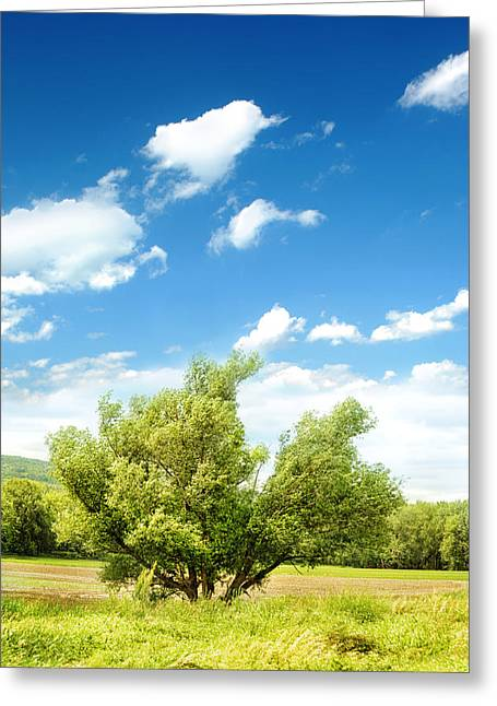 Deerfield Greeting Cards - Lush Field Greeting Card by HD Connelly