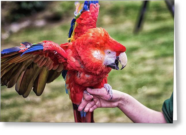 Macaw Greeting Card by Martin Newman