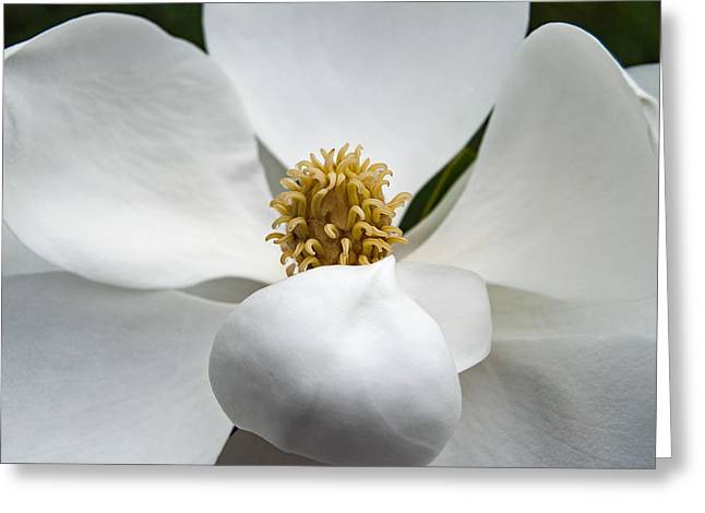 Magnolia Flower Greeting Card