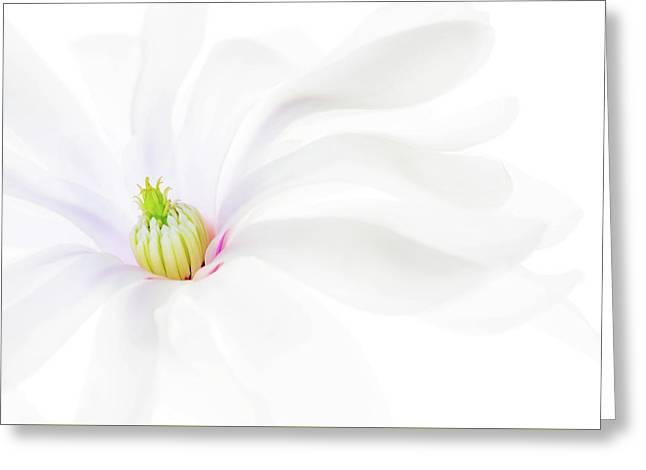 Magnolia Greeting Card by Rebecca Cozart