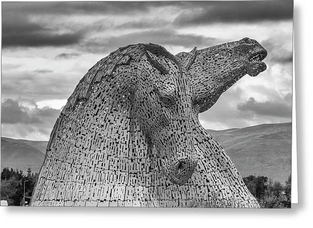 Kelpie greeting cards page 3 of 13 fine art america majestic greeting card m4hsunfo